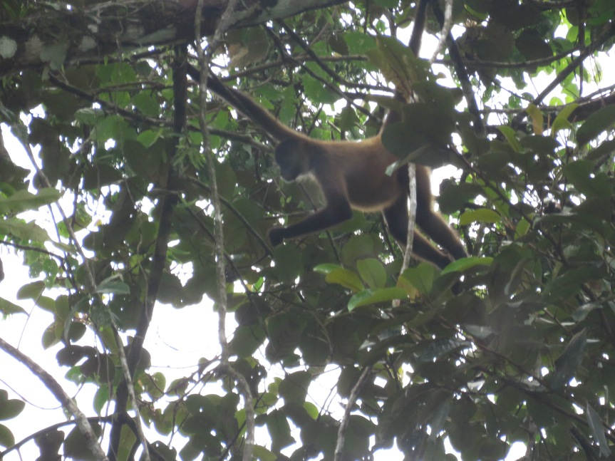 Day 3 – Part 2 – 07-14-17:  Walk in the National Park of Tortuguero and Canal BoatTour