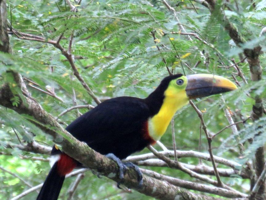 7-15 to 7-17 Tirimbina in the TropicalLowlands