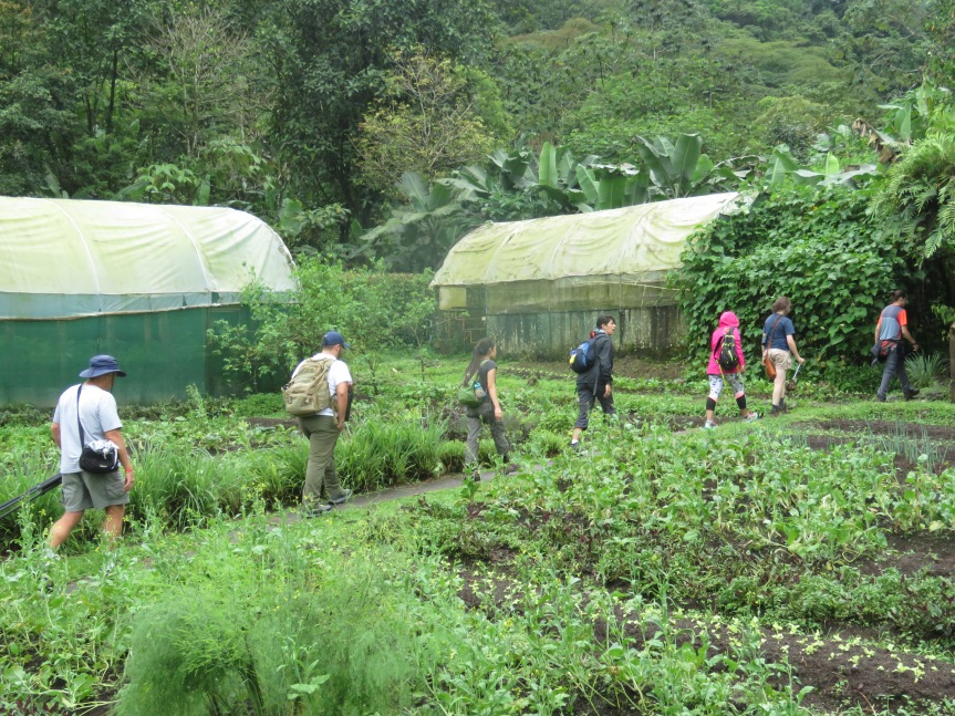 3pm – 07-18-17:  Milking Cows and Planting Seedlings at RanchoMargot